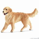 Golden Retriever, Female (plan)