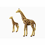6640 - Giraffe with Calf