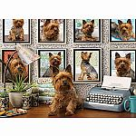 1000pc Yorkies Are My Type